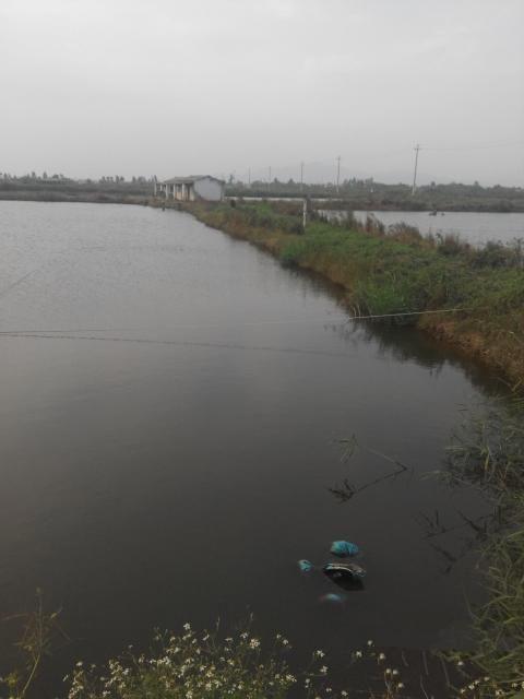 广东珠海金湾区30亩鱼塘转让-金土地
